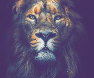 animal, animals, and king image