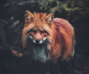 adventure, alternative, and animal image