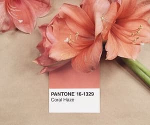 aesthetic, flower, and peachy image