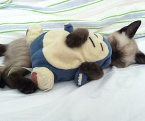 cat, cute, and pokemon image