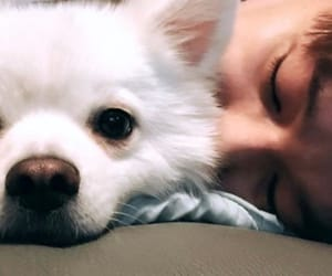 crush, doyou, and dog image