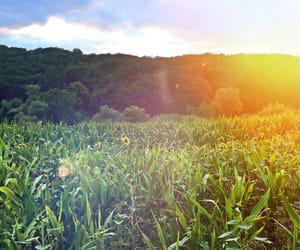 field, light, and feld image