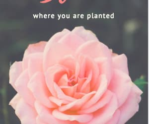 bloom, inspiration, and quotes image