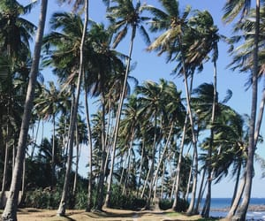 bali, beach, and coconuttree image