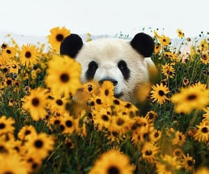 beauty, cuteness, and flowers image