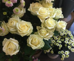 roses, beastly, and beautiful roses image