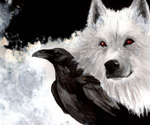 wolf, game of thrones, and crow image