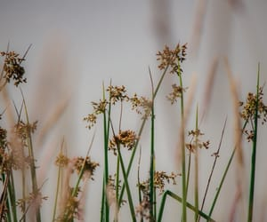 plants, rushes, and beauty image