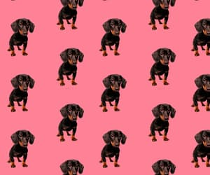 dog, wallpaper, and cute image