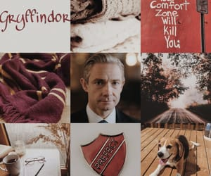 aesthetic, beagle, and gryffindor image