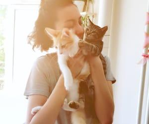 cat, kitty, and hujicam image