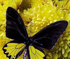 Animales, belleza, and mariposa image