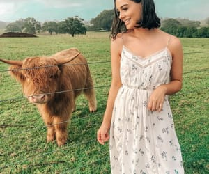 beauty, brown, and farm image