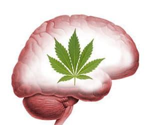 420, brains, and hallucination image