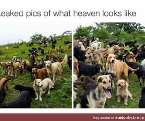 heaven, they, and die image