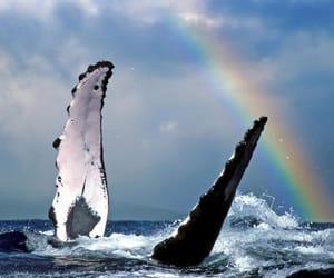 ocean, animal, and rainbow image