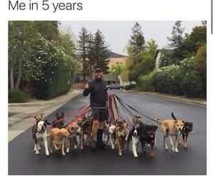 dogs, dream job, and doggos image