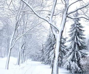 landscape, photography, and snow image