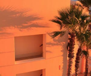 orange, aesthetic, and palm trees image