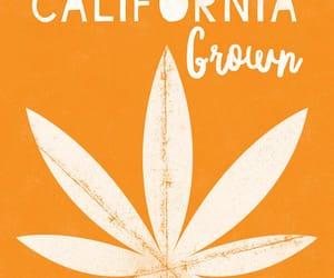420, america, and orange image