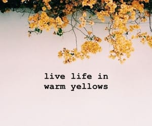 yellow, quotes, and flowers image