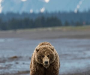 grizzly bear, mountain, and water image