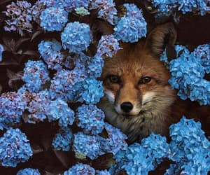 fox, flowers, and nature image