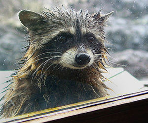 animals, rain, and most favorited image