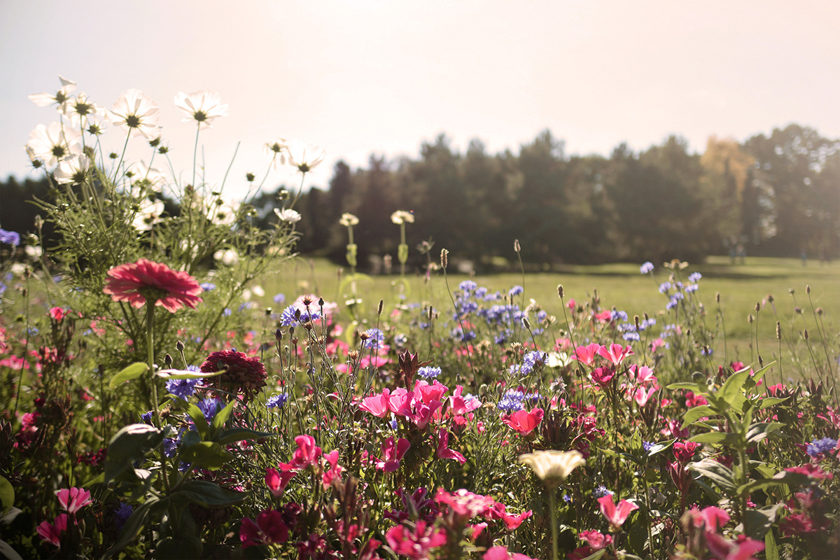 nature, flowers, and landscape image