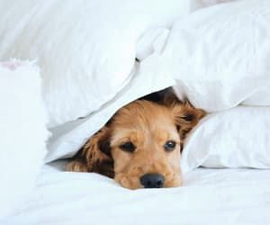 bed, doggie, and dogs image