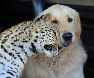 dog, animal, and leopard image