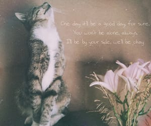 cat, inspiration, and quotes image