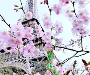 flower, paris, and sakura image