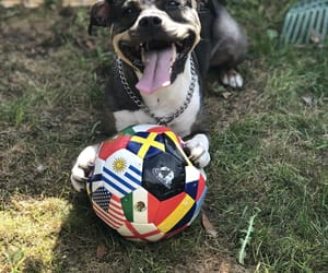 ball, summer, and amstaff image