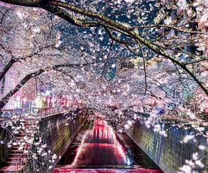 tokyo, japan, and flowers image