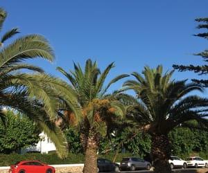 palm tree, palms, and spain image
