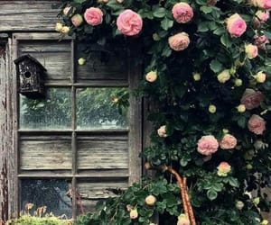flowers, roses, and rustic image