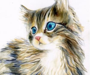 cat, kitten, and maine coon cat image
