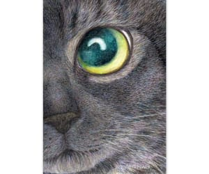 black cat, cat eye, and Cat Face image