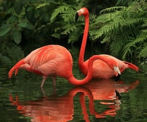 flamingo, nature, and animal image