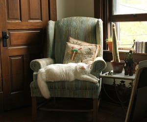 armchair, cat, and home image