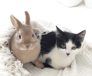 adorable, babies, and bunnies image
