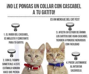 animals, dog, and cat image