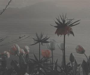 aesthetic, dark, and packs image