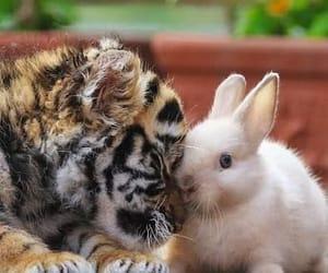 animals image