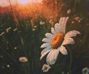 daisies, fields, and mother nature image