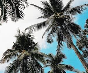 beach, nice, and blue sky image