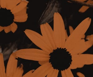 flowers, orange, and theme image