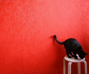 cat and red image