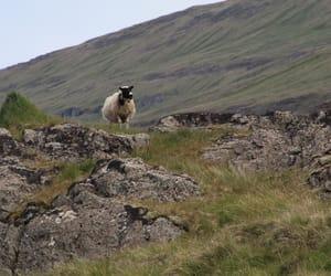 iceland, reykjavik, and lamb image